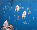 'Fish Attack