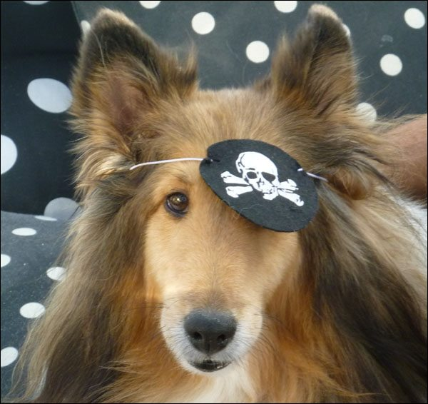 Pirate Dog!