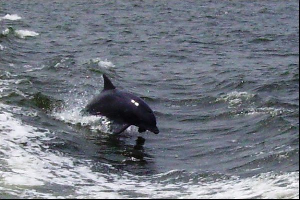 Dophin in Our Wake