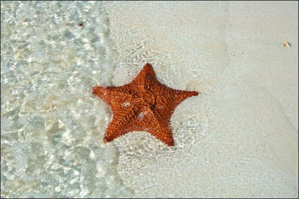 Star Fish, Star Bright