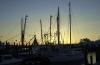 Oriental Harbor Sunset