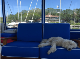Shared Photo : Boating is Such Hard Work!