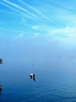 Shared Photo – Foggy Morning on Manatee River