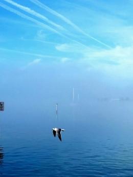 Shared Photo – Foggy Morning on Manatee River