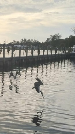 Shared Photo – Pelican with Its Dinner in Sight