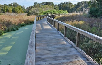 Cypress Wetlands Boardwalk